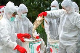 Извънредни мерки заради огнището на птичи грип в Бургаска област