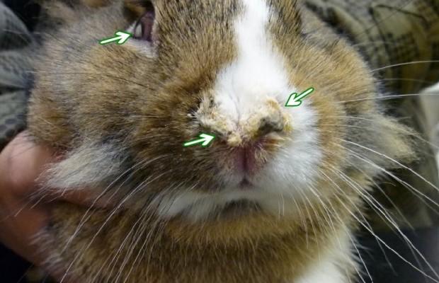 Болести по зайците