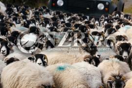 Субсидии за животни 2015