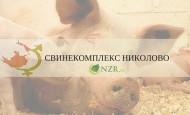 Свинекомплекс Николово АД