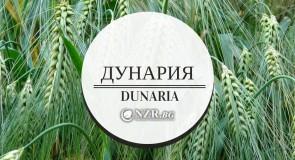 ДУНАРИЯ ООД