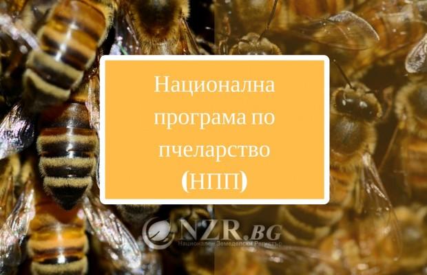 От 19 декември стартира приема по Националната програма по пчеларство