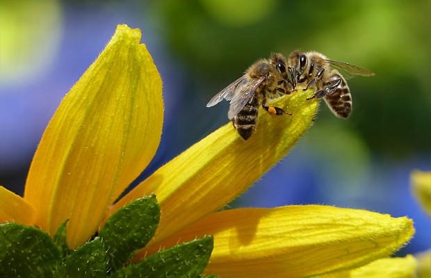30 златни правила за отглеждане на пчели